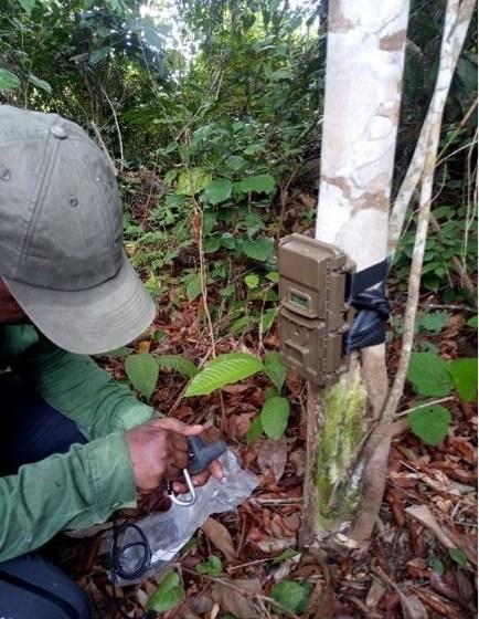 Gabon/Environnement: Quand les nouvelles technologies se mettent au service de la biodiversité