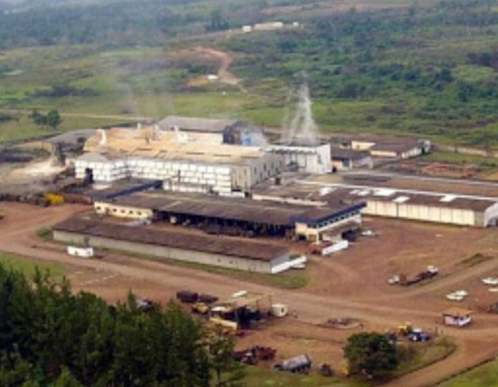 """Gabon/Entreprise: La Sucaf-Gabon, une """"mine d'or"""" au cœur du Haut-Ogooué"""