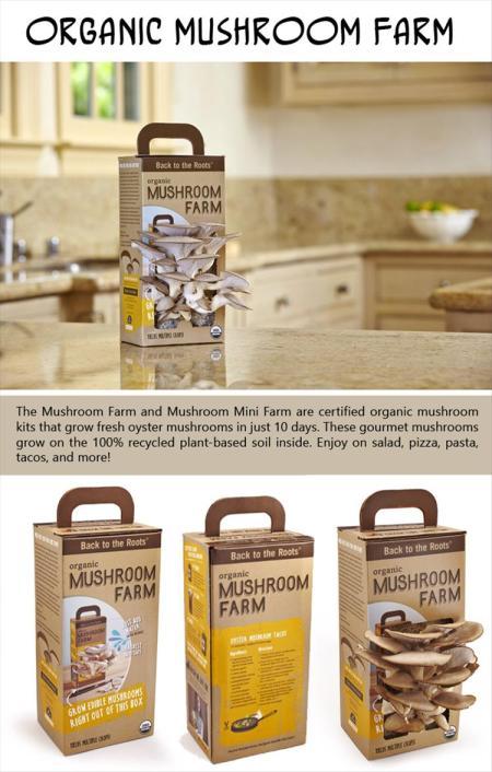 Organic-Mushroom-Farm