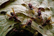 insektenmittel gegen spinnen insekten und spinnen seite 88 allmystery