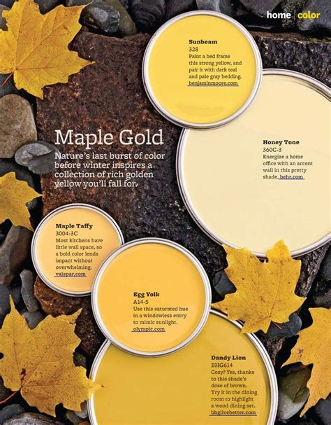 imagine design 5 maple gold paint colors homes