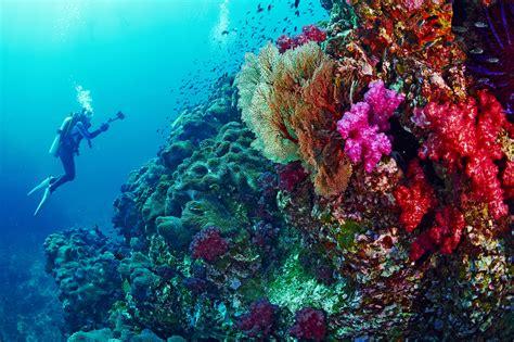 scuba diving thailand dive sites updated