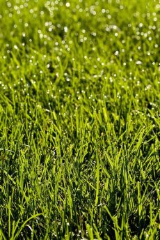 the best grass for florida the best types of grass for florida lawns