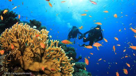 phuket scuba diving thailand liveaboards scuba clubs information