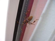 insektenspray gegen spinnenlaufer insekten und spinnen seite 173 allmystery