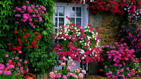 10 maintenance flowers effortless garden