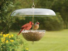 dove resistant bird feeders garden pergola attract cardinals to your backyard with cardinal bird feeder