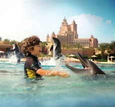 at the dolphin bay top 6 things to do at atlantis the palm for a great eid
