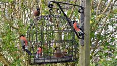 dove resistant bird feeders the bird cage anti squirrel and pigeon proof bird feeder
