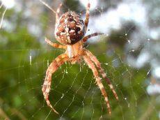 hausmittel gegen spinnen spinnen vertreiben und fernhalten - Insektenmittel Gegen Spinnen