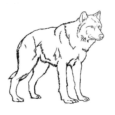 realistic wolf coloring pages story stone ideas