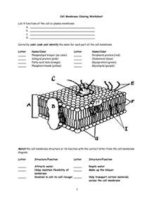 10 best images of cell membrane diagram worksheet cell membrane diagram labeled cell membrane - Cell Membrane Diagram Worksheet Labeled