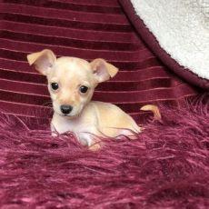 perros en venta en houston tx perros en venta baratos en houston tx noticias perro