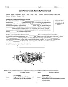 cell membrane diagram worksheet answers cell membrane tonicity worksheet