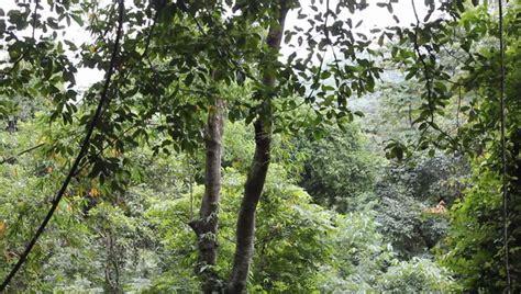 tropical rainforest biome precipitation location climate tropical rainforest