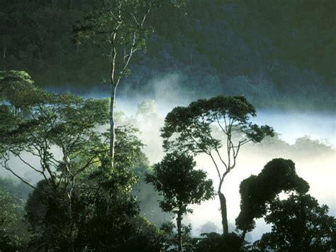 animals plants rainforest tropical rainforest animals plants