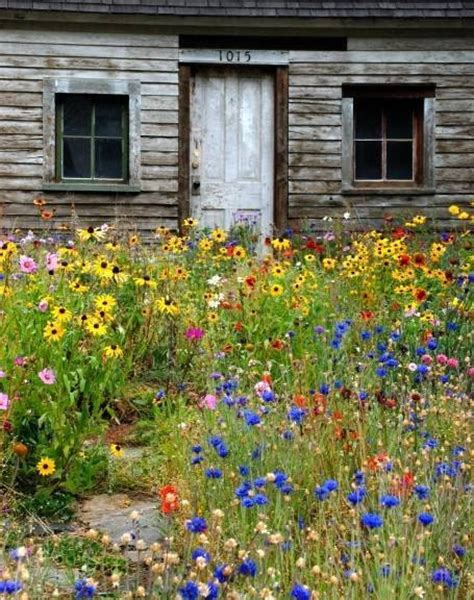 wildflower garden pictures photos images facebook tumblr pinterest