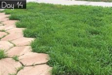 the best grass seed for florida how to grow grass from seed in florida like a pro my design