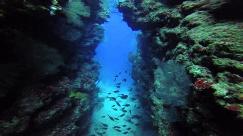 roatan scuba diving coco view youtube