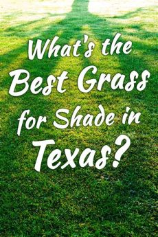 best grass for texas shade what s the best grass for shade in garden tabs