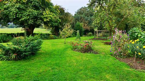 landscaping native plants benefits plan yard