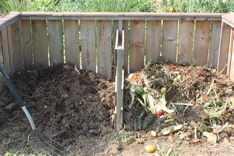 5 simple tips growing healthy vibrant organic garden