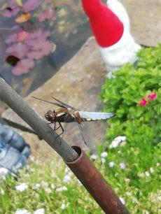 insektenmittel gegen spinnen insekten und spinnen seite 338 allmystery