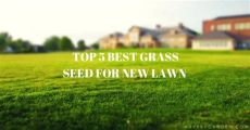 best grass seed topper top 5 best grass seed for new lawn reviews 2019