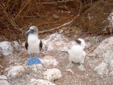 baby blue and white foosites blue footed babies not yet baby animal zoo