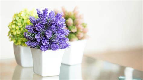 indoors plants flowers easy houseplants easy care indoor
