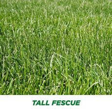 tall fescue grass types smart seed fescue grass seed pennington