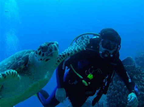 roatan scuba diving roatan cruise excursions