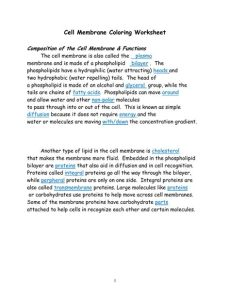 cell membrane coloring worksheet cell membrane answer key
