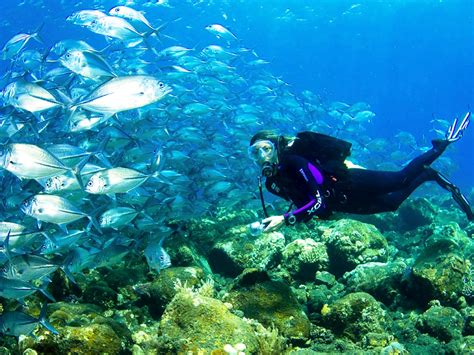 scuba diving tenneco towers miami florida usa