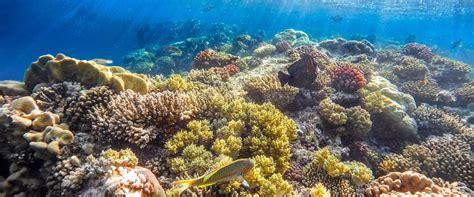 56 liveaboards red sea egypt liveaboard