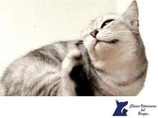 causas por las que una lavadora no exprime cl 205 nica veterinaria bosque 191 sab 237 as que los gatos pueden tener caspa una de las muchas