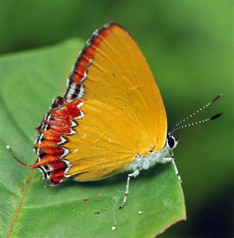 tropical rainforest butterfly biological science picture directory pulpbits