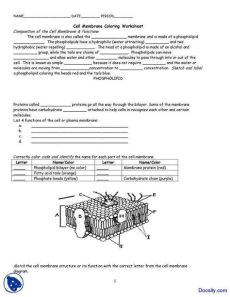 cell membrane coloring worksheet answer key pdf cell membrane worksheet homeschooldressage