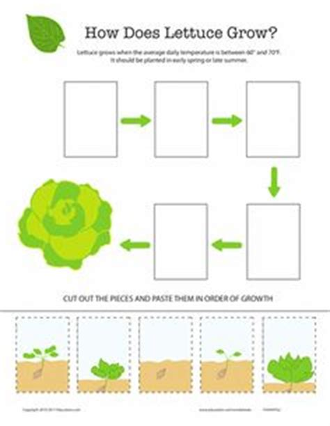 free printable vegetable garden word match worksheet kindergarten