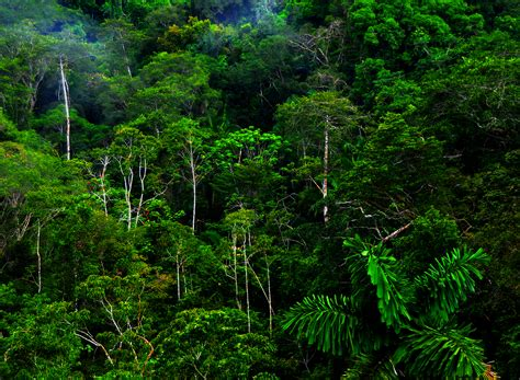 tropical rainforest tropical rainforest glogster interactive multimedia posters