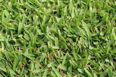 best grass for texas shade best grasses for residential landscapes in peterson s landscape
