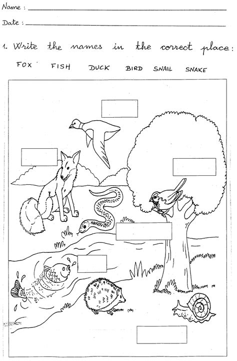 Worksheets For 1st Grade Science.html
