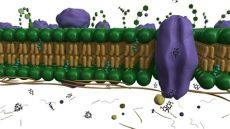 cell membrane model 3d 3d cell membrane model