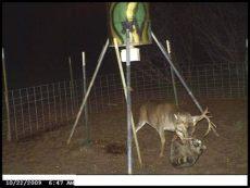 diy coon proof deer feeder boston s around a deer feeder