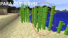 la pomada de la cana sirve para el acne como se cultiva el cactus como se cultiva la ca 209 a de azucar para que sirve