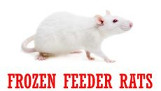 feeder rats for sale online top quality frozen feeder rats for sale ugrodents