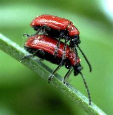 insektenmittel gegen spinnen insekten und spinnen seite 288 allmystery