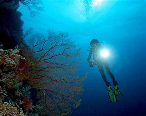 panama diving scuba diving panama