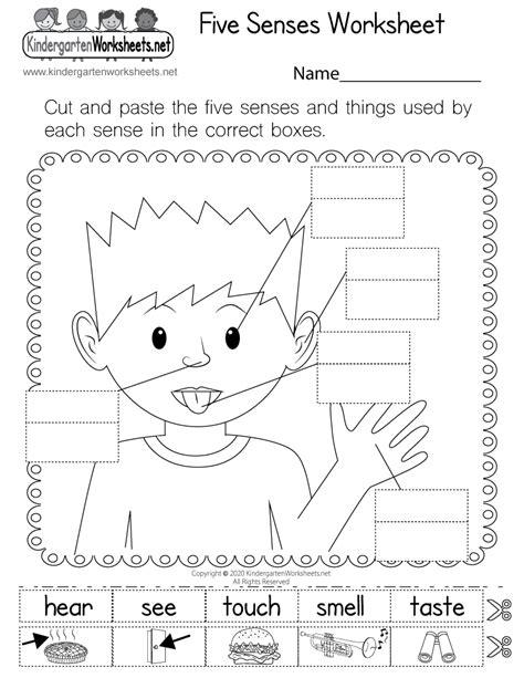 sense worksheet 989 sense organs worksheets grade 2