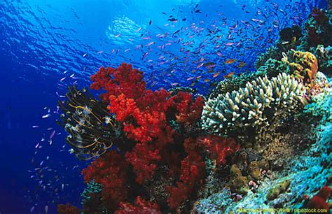 reef diving fiji shark dive